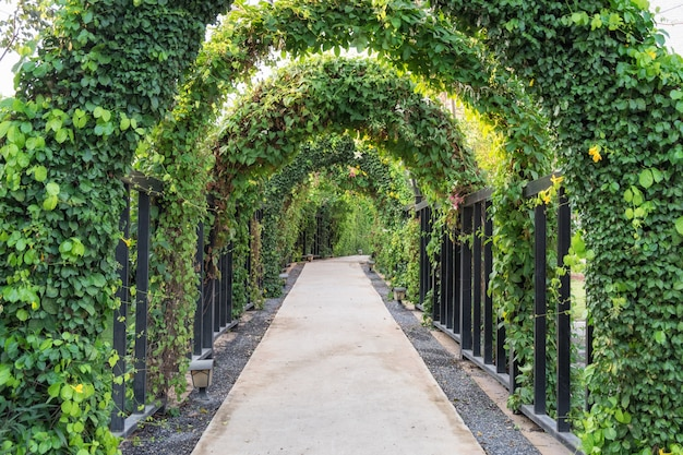 Tunelowa ścieżki drzewa zieleń ciemniutka