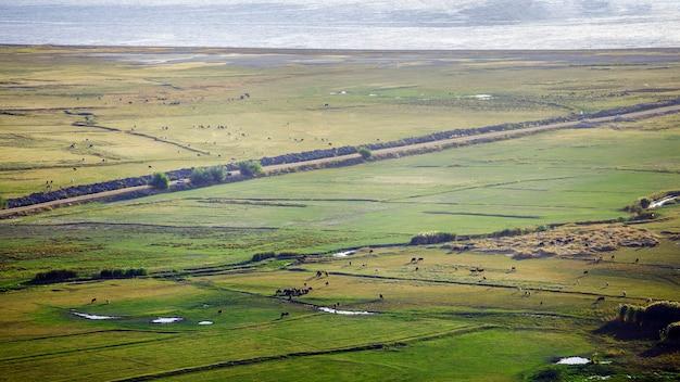 Turcja, van. zielone łąki w pobliżu jeziora van, po których spacerują krowy