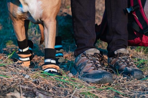 Turysta i pies w butach turystycznych stoją obok siebie w lesie. nogi i łapy psa w butach turystycznych i mężczyzna trzymający plecak na zdjęciu w wieczornym słońcu