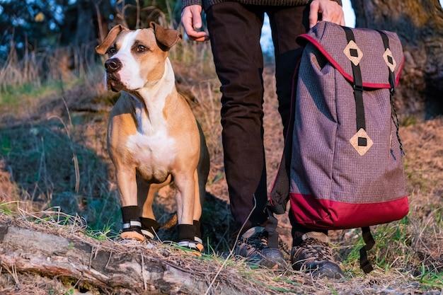 Turysta i pies w butach turystycznych stoją obok siebie w lesie. pies w butach turystycznych i mężczyzna trzyma plecak na zdjęciu w wieczornym słońcu