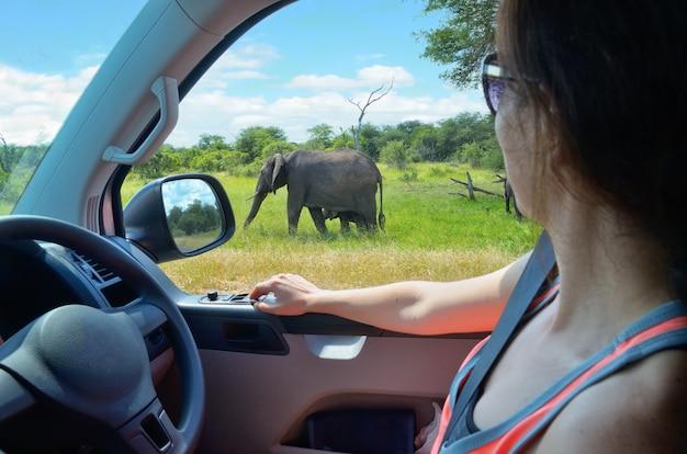 Turysta kobieta na wakacje samochodem safari w afryce południowej, patrząc na słonia w sawannie