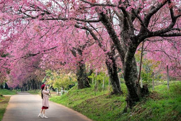 Turysta robi zdjęcie przy różowym kwiecie wiśni wiosną
