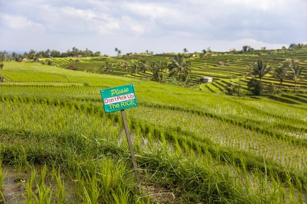 Turysty znak ostrzegawczy przy ryżowymi polami jatiluwih w południowo-wschodni bali