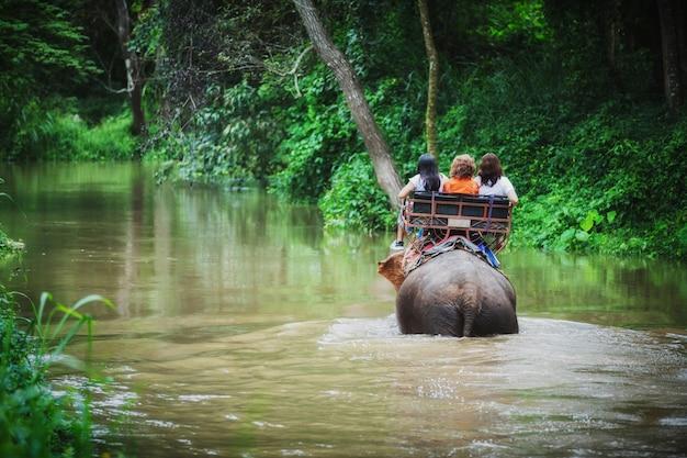 Turystyczna jazda na słoniach trekking w tajlandii