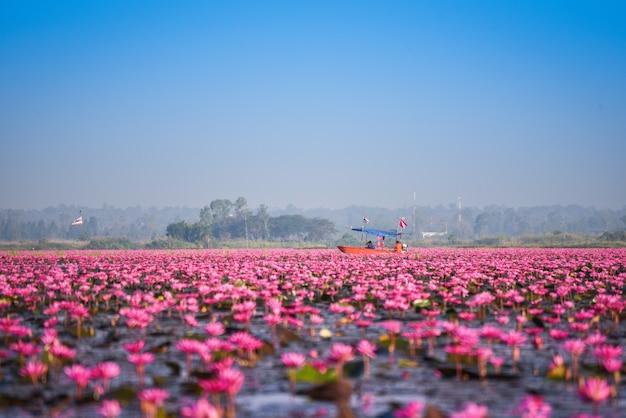 Turystyczna łódź na jeziornej rzece z czerwonymi lotosowymi lelui pola menchii kwiatu wody natury krajobrazem w ranku punkcie zwrotnym w udon thani tajlandia