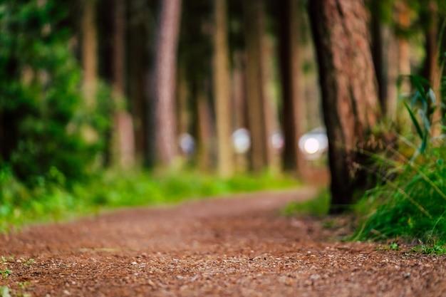 Turystyczny szlak turystyczny w lesie - częściowo niewyraźne zdjęcie z miejsca na kopię