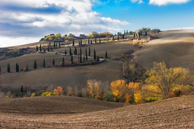 Tuscany droga z cyprysowymi drzewami, val d'orcia, włochy.