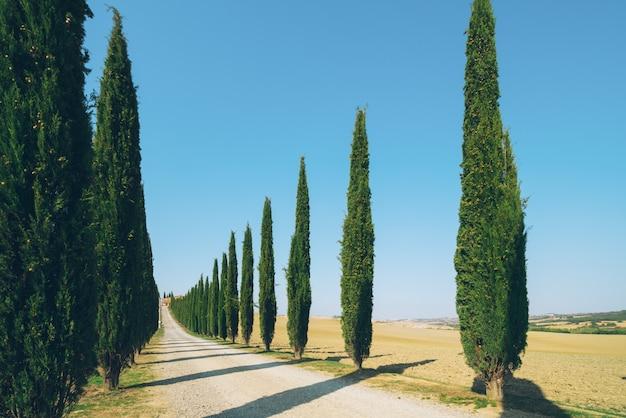 Tuscany krajobraz cyprysowi drzewa drogowi w włochy.