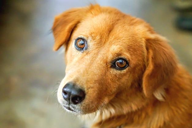 Twarz psa wyraża wątpliwości na rozmytym tle.