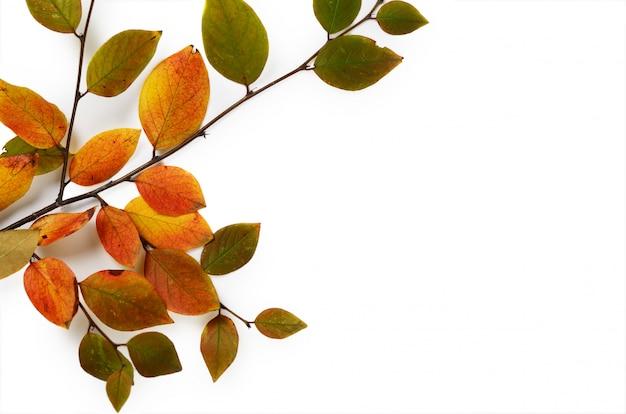 Twórcza kompozycja jesienna. gałąź i kolor żółty opuszczamy na białym tle.