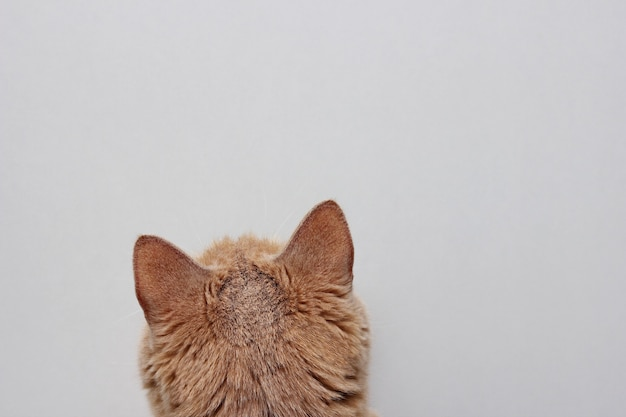 Tył głowy czerwonego kota, zbliżenie głowy kota od tyłu.