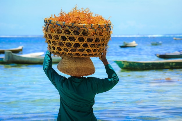 Tylna strona kobiety niesie kosz pomarańczowych wodorostów na głowie na farmie wodorostów na wyspie nusa penida na bali, indonezja