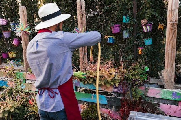 Tylni widok mężczyzna jest ubranym kapelusz nawadnia rośliny z wężem w ogródzie