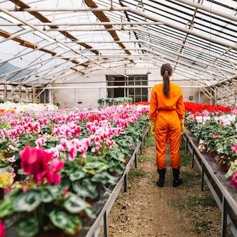 Tylni widok ogrodniczka stoi blisko kwiatów dorośnięcia w szklarni