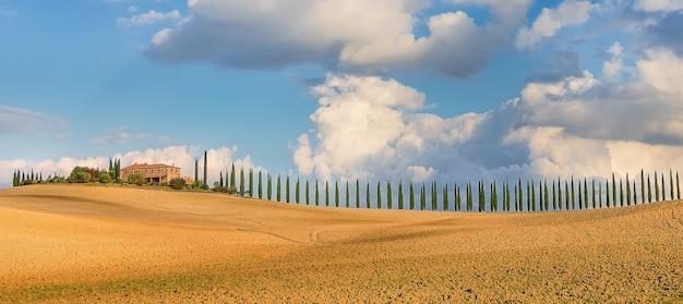 Typowa włoska farma z aleją cyprysową oraz polami pszenicy i jęczmienia w sienie toskania włochy