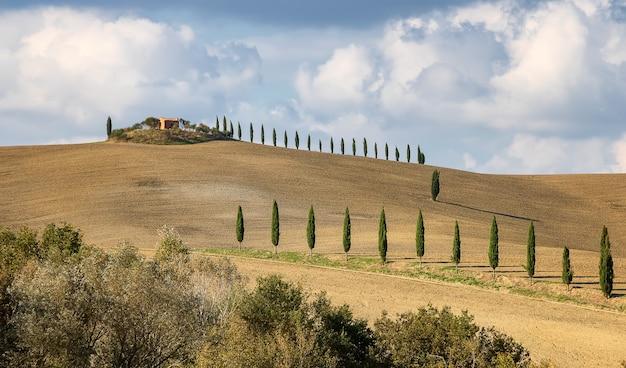 Typowe włoskie pola uprawne z cyprysowymi polami pszenicy i jęczmienia w sienie toskania włochy