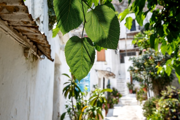 Typowy i tradycyjny grecki dziedziniec, ulica z białymi ścianami i jasnymi kwiatami