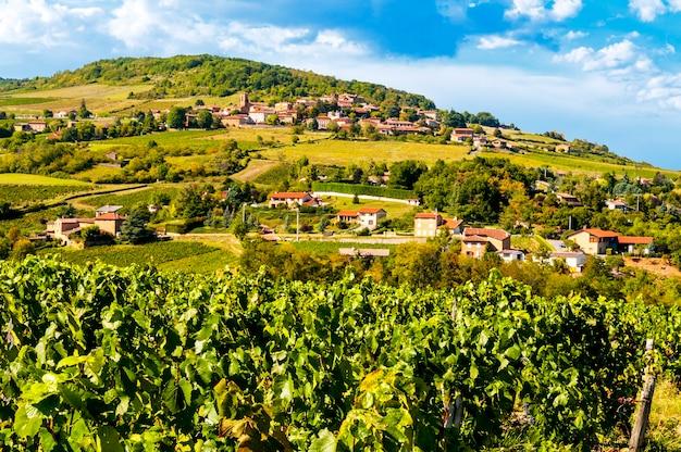 Typowy krajobraz beaujolais we francji