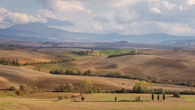 Typowy włoski krajobraz z aleją cyprysową wzgórza pola pszenicy i jęczmienia w toskanii we włoszech