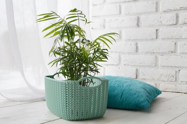 Udomowione rośliny i poduszka