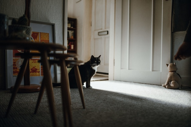 Ujęcie czarnego kota domowego na podłodze pośrodku pokoju przy drzwiach