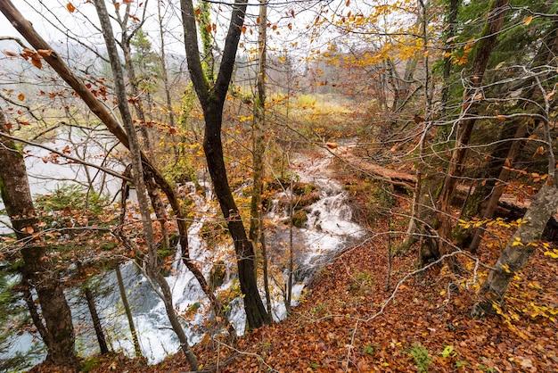 Ujęcie jesiennych lasów i krótkich wodospadów w parku narodowym jezior plitwickich w chorwacji