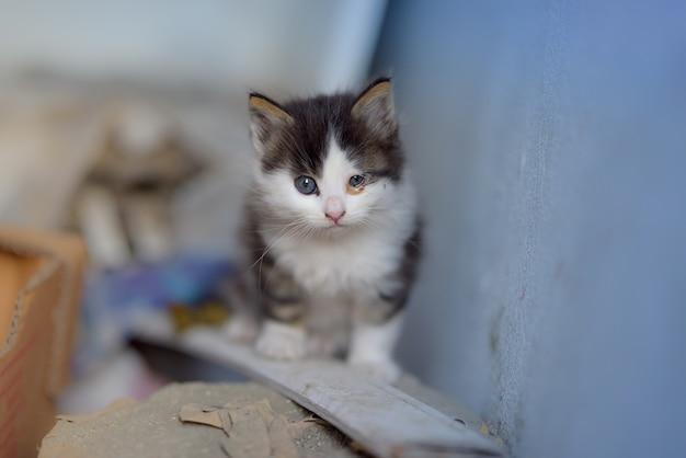 Ujęcie kociaka z dwoma charakterystycznymi oczami różnej wielkości, siedzącego na drewnianej desce