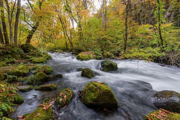 Ujęcie pod dużym kątem omszałych kamieni w spienionej rzece płynącej w lesie