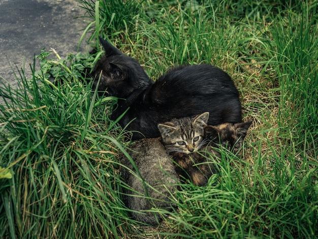 Ujęcie pod wysokim kątem różnych kotów na trawie