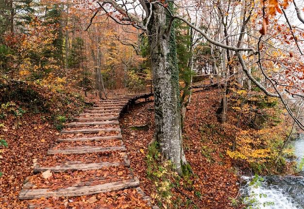 Ujęcie schodów pokrytych czerwono-żółtymi liśćmi w parku narodowym jezior plitwickich w chorwacji