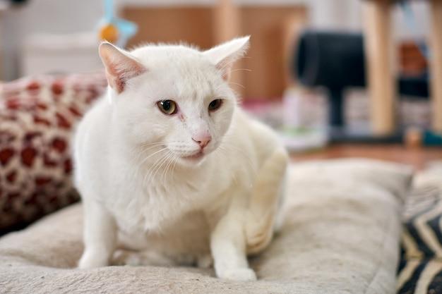 Ujęcie selektywnej ostrości białego kota relaksującego się na swoim wygodnym łóżku