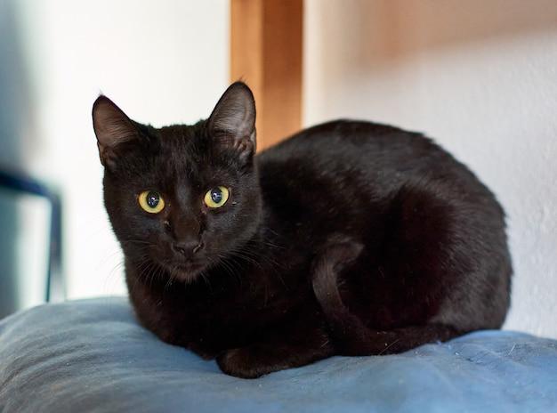 Ujęcie selektywnej ostrości czarnego kota relaksującego się w swoim wygodnym łóżku