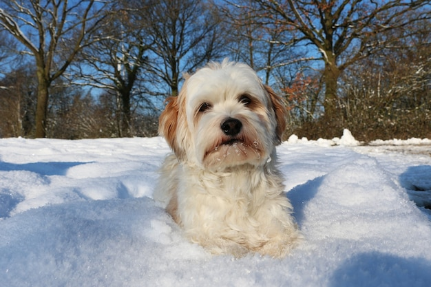 Ujęcie słodkiego białego puszystego szczeniaka w śniegu