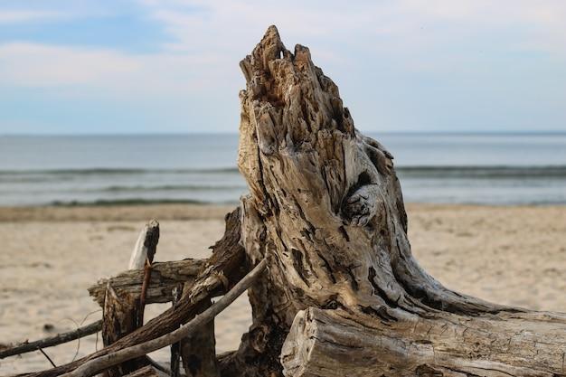 Ujęcie uschniętego drzewa na plaży z widokiem na morze
