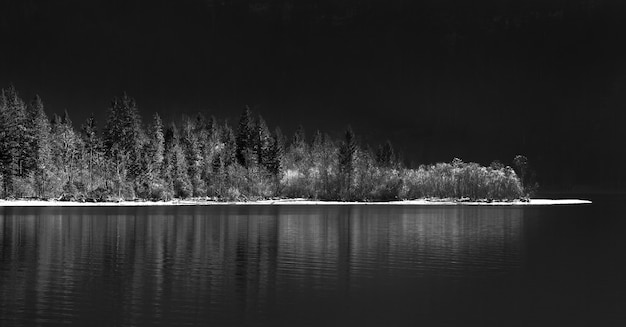 Ujęcie w skali szarości jeziora otoczonego lasem w nocy