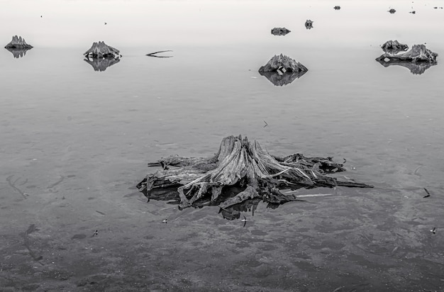 Ujęcie w skali szarości korzeni starych drzew na zamarzniętej ziemi