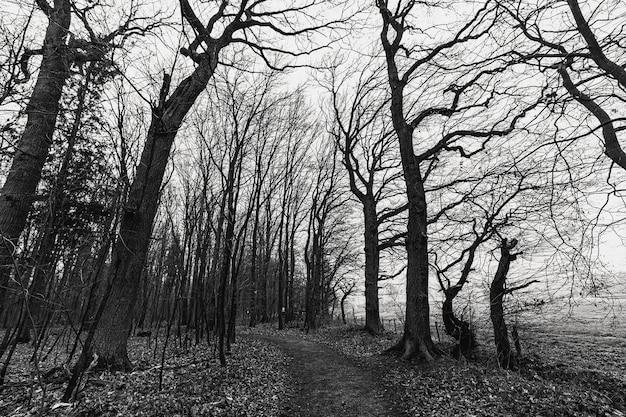 Ujęcie w skali szarości przerażającego lasu