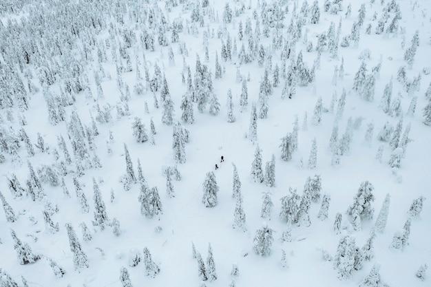 Ujęcie z drona ludzi trekkingowych w zaśnieżonym lesie w laponii w finlandii