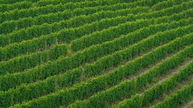 Ujęcie z wysokiego kąta pola nowo posadzonych zielonych drzew - idealne do artykułu o produkcji wina