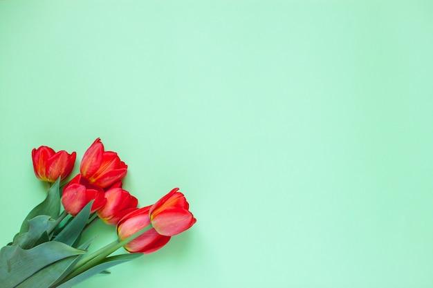Układ czerwonych jaskrawych tulipanów na zielonym tle