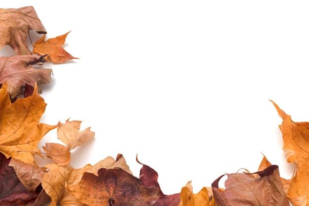 Układ jesiennych suchych liści klonu na białym tle. skopiuj przestrzeń, koncepcja ramki jesień.