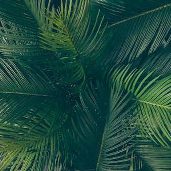 Układ kreatywnych tropikalnych zielonych liści. koncepcja wiosna natura. leżał na płasko.