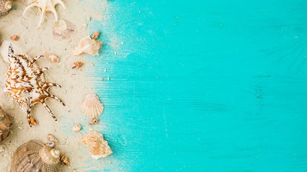 Układ muszelek wśród piasku na pokładzie