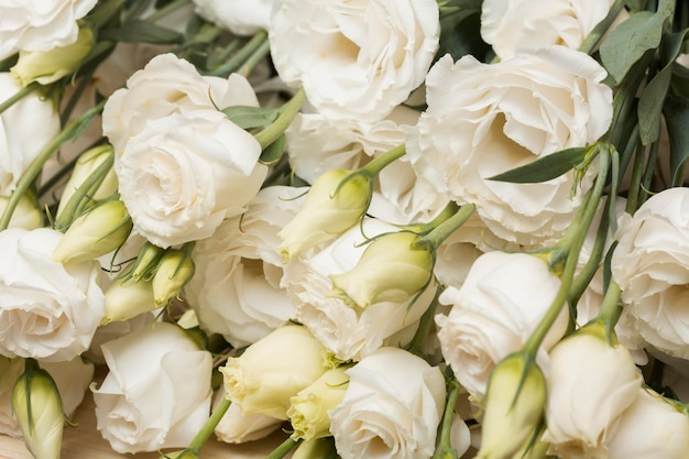 Układ pięknych kwiatów w tle