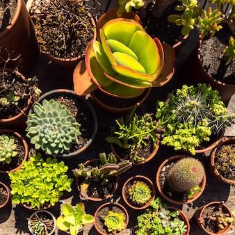 Układ różnych pięknych roślin