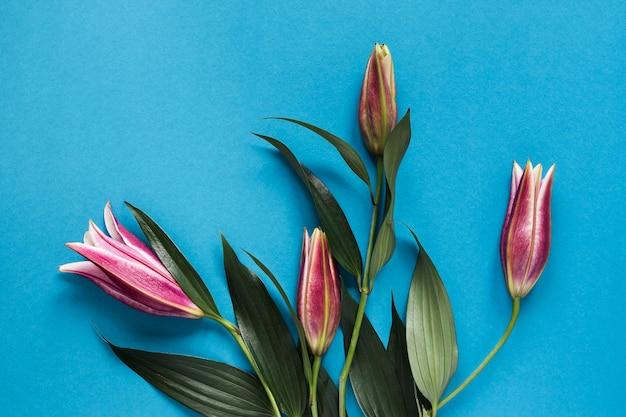 Układ widok z góry lilii królewskich