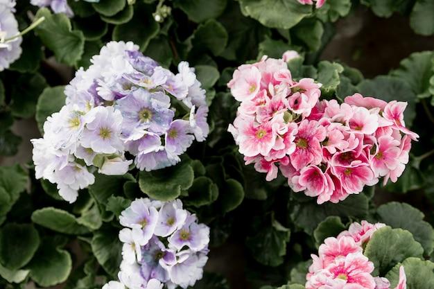 Układ widok z góry z pięknymi kwiatami