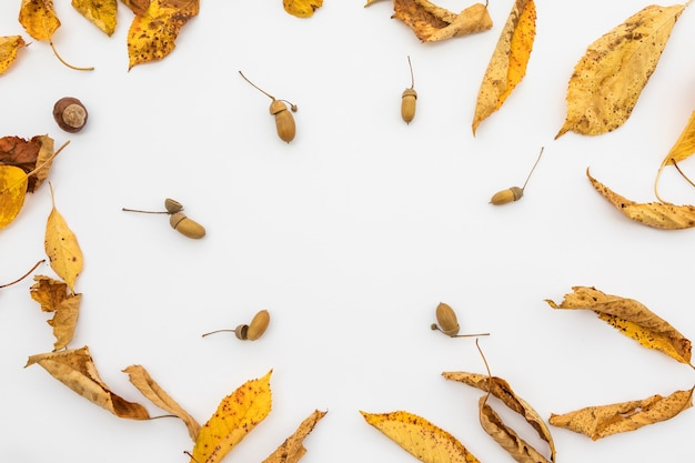 Układ widok z góry z żółtymi liśćmi i żołędziami