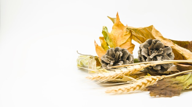 Układ z szyszek i kłosy pszenicy