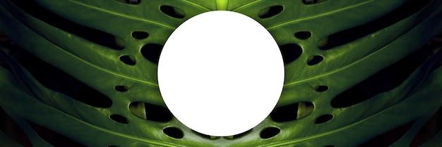 Układ zielonych liści monstery z tekstem spacji, obraz panoramiczny